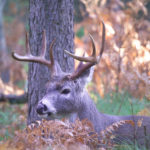 Deer Hunting, Setting Yourself up for Success
