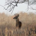 Three Important Benefits of Hunting Insurance