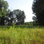 Turn Your Hunting Land Into Deer Magnets With Food Plots