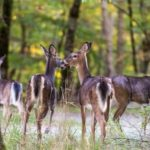 Whitetail: Scouting on the Off Season