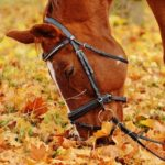 Preparation is the Key to Safely Traveling with Horses