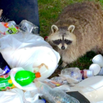 Top 3 Raccoon Proof Trash Can Options and DYI