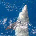 Shark Fishing in Key West