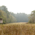 Tips for Buying Deer Hunting Land
