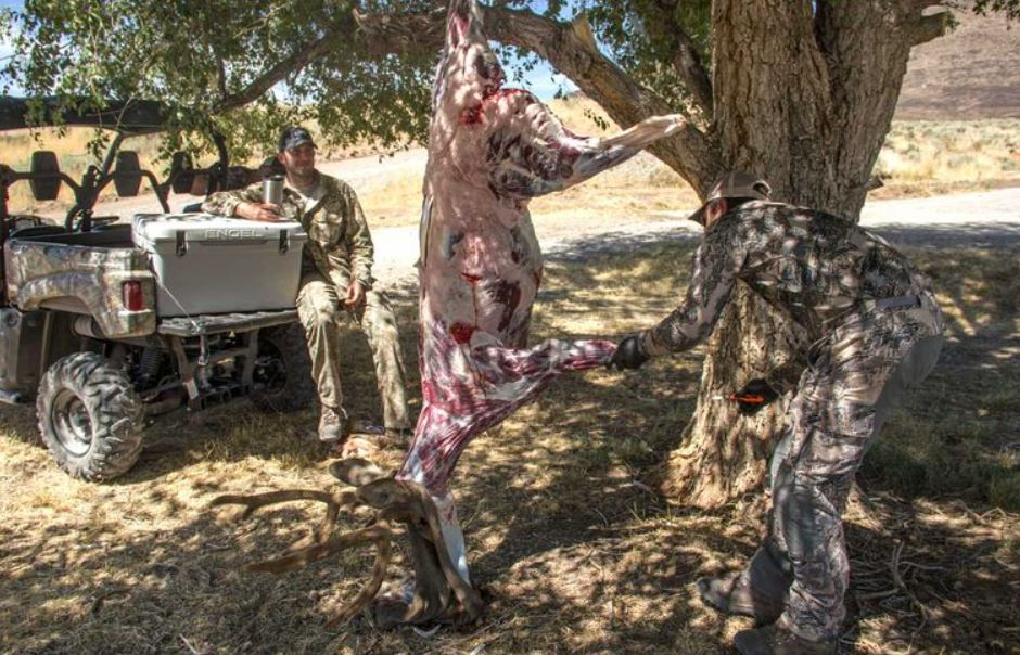 Skinned deer hanging